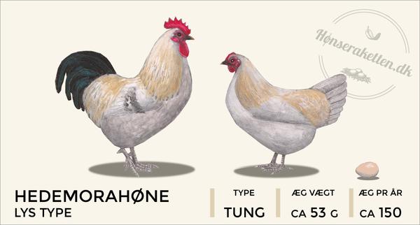 Hedemorahøns
